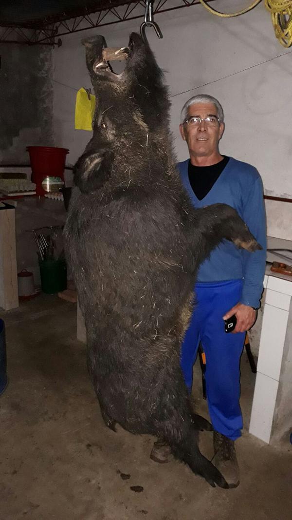 caza jabalí Uruguay
